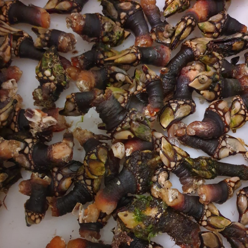 "Percebes de ""A Costa da morte"""